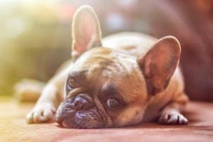 Vật nuôi: Chó vẫn là yêu thích của tôi